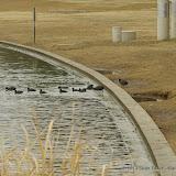 01-26-13 White Rock Lake - IMGP4360.JPG