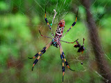 """Brazos Bend Spider"" by Michael Laakso -- 3d Place Digital Special A"
