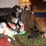 The Dynamite Danes Family! - image0002.jpg
