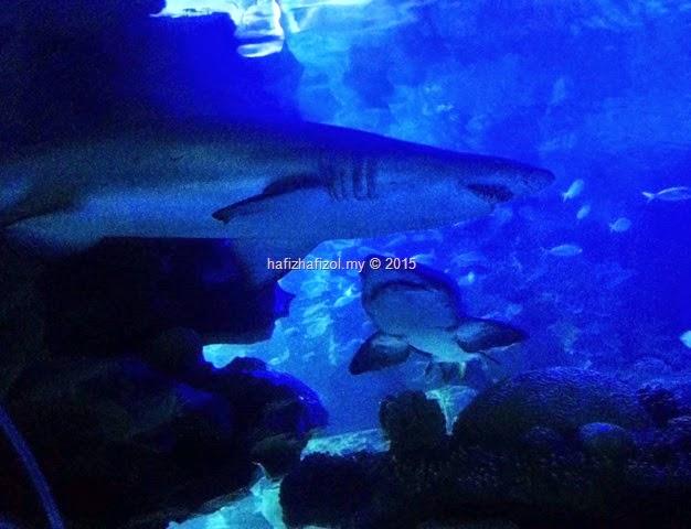 gambar baby shark