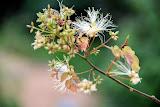 flower (82).jpg
