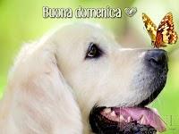 buona domenica buon giorno immagine con scritta cane farfalla.jpg