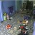 Cobra arisca invade casa e criança é salva pelo pai; assista