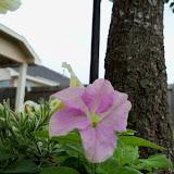 Gardening 2012 - 115_1383.JPG