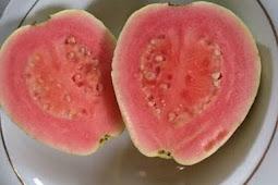 Manfaat buah jambu biji