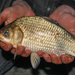20150418_Fishing_Ostrog_020.jpg