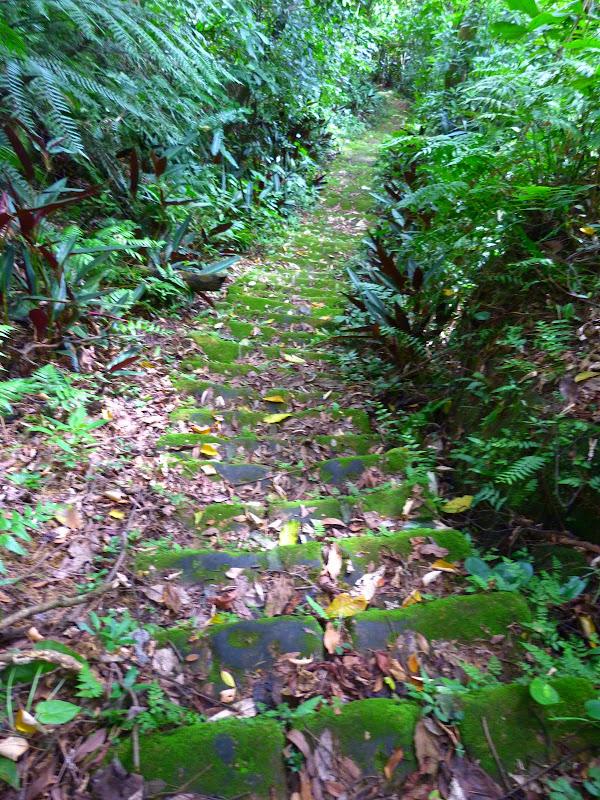 Taipei. Si Shou shan, en plein coeur de Taipei. Accès par un chemin bien plus sauvage. - P1240823.JPG