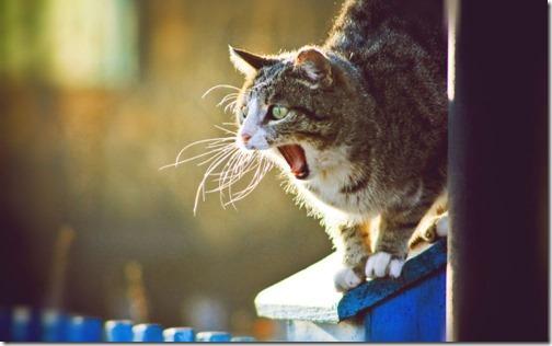 22 fotos de gats (4)