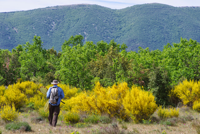 Plateau de Coupon (511 m), Viens (Vaucluse), 12 mai 2014. Photo : J.-M. Gayman