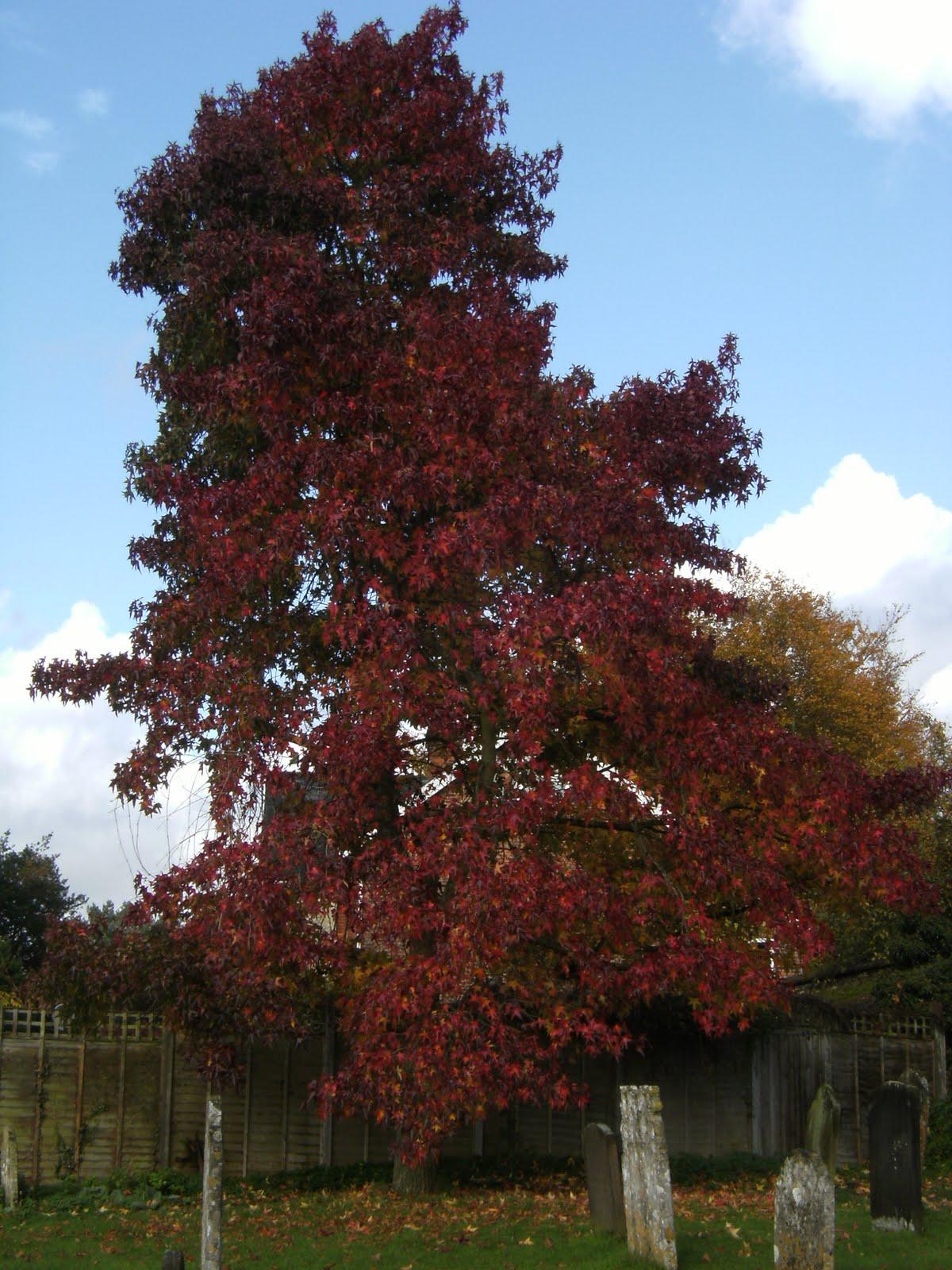 1010300041 Autumn colours in St Nicholas' churchyard