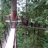 treetops bridges in North Vancouver, British Columbia, Canada