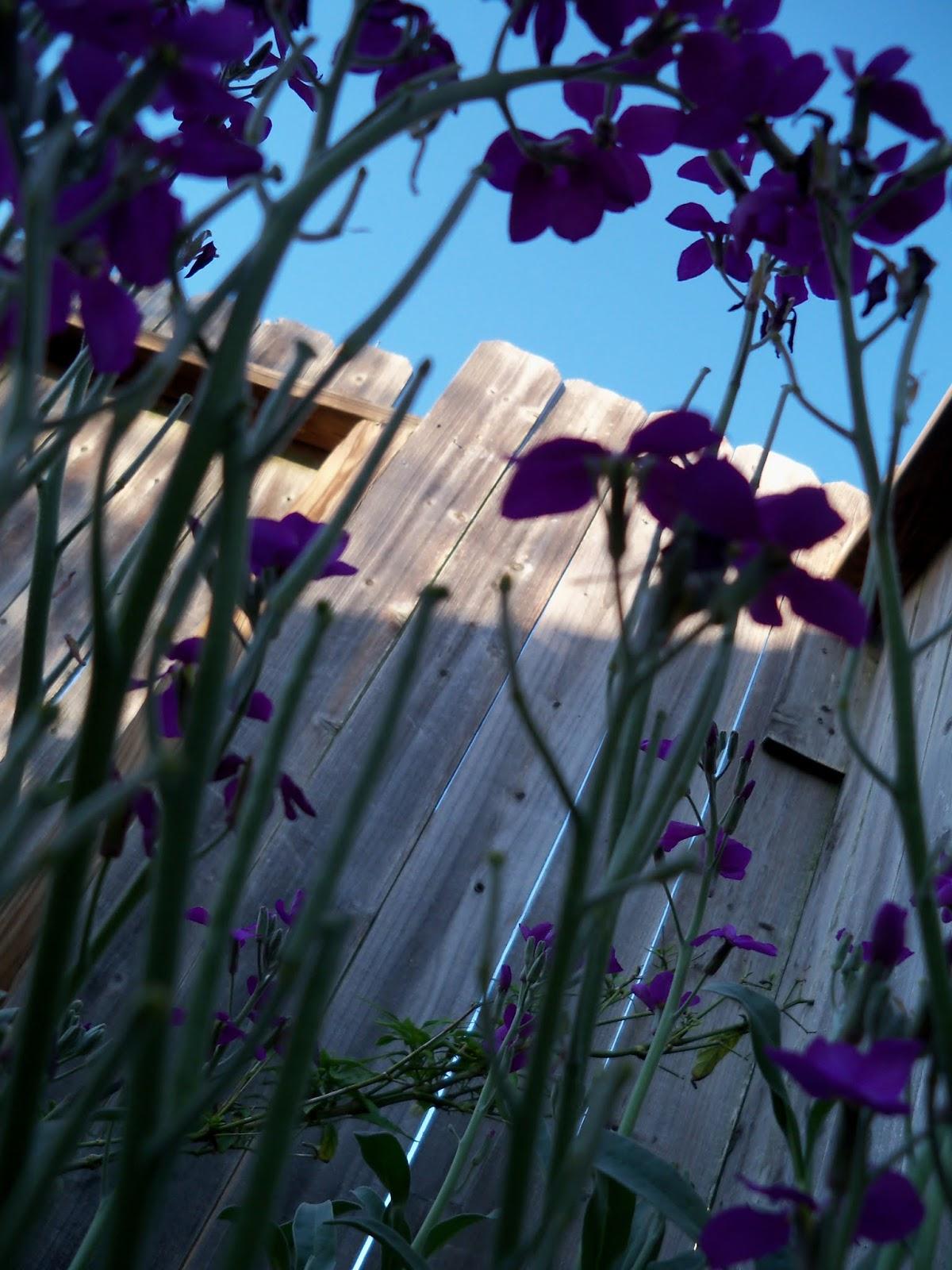 Gardening 2013 - 115_5441.JPG