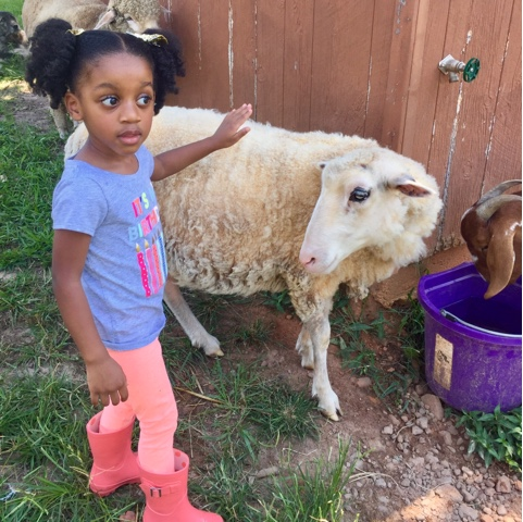 top black atlanta georgia mommy blogger little girl natural hair full circle farm sanctuary lamb sheep warm springs
