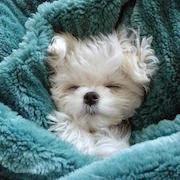 к чему снится щенок на руках?