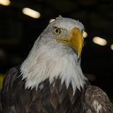 Go Ahead Eagles - FC Oss