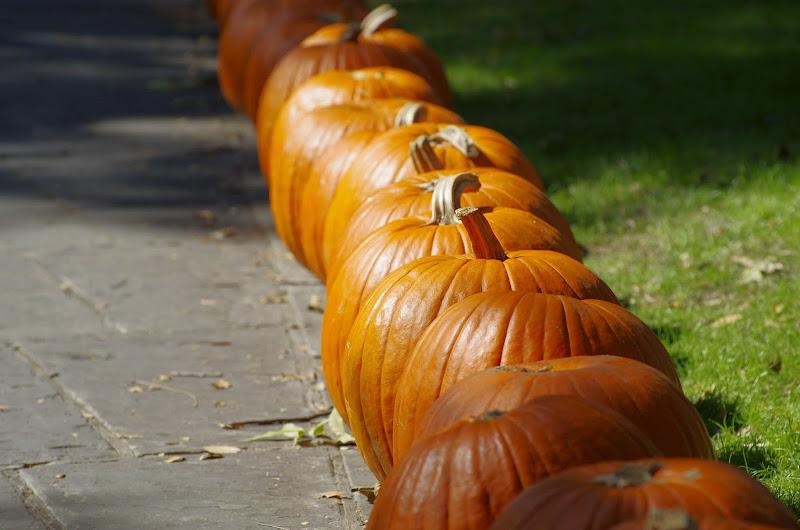 10-26-14 Dallas Arboretum - _IGP4292.JPG