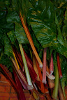 Chard that just keeps on keeping on.