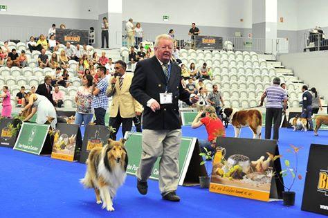 """Exposição Canina de Lamego escolhe """"Campeão Nacional de Beleza"""""""