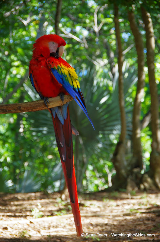 01-01-14 Western Caribbean Cruise - Day 4 - Roatan, Honduras - IMGP0947.JPG