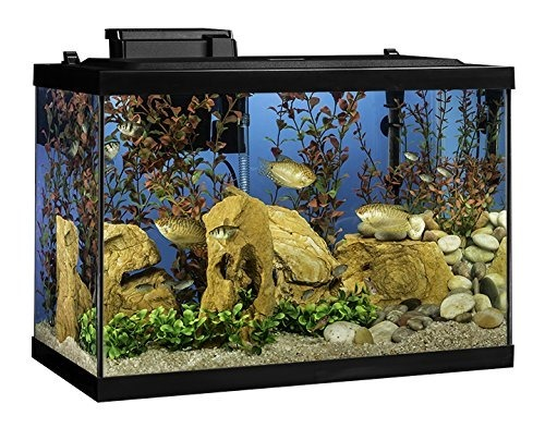 20-gallon-aquarium-kit-for-sale