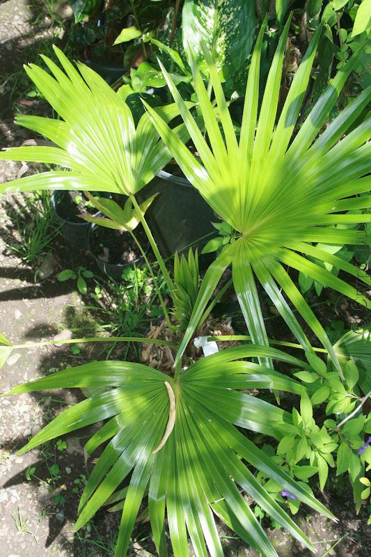 Futur jardin d'orchidées!!! - Page 2 IMG_3679