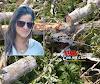 Urgente: Queda de árvore provoca acidente fatal na área rural de Alta Floresta
