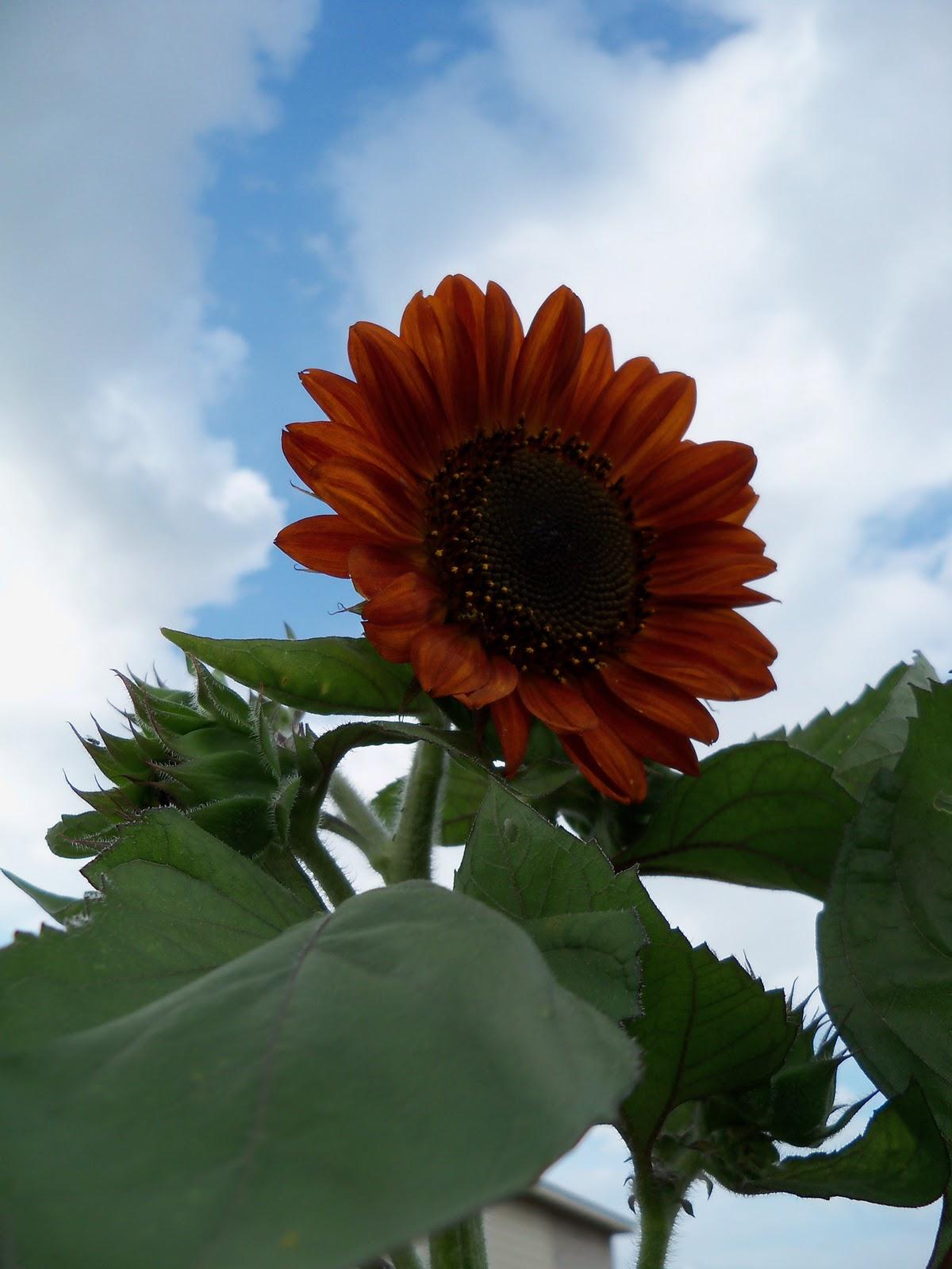 Gardening 2010, Part Three - 101_3581.JPG