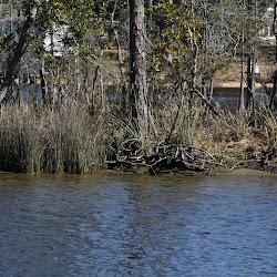 Fowl Marsh from Boat Feb3 2013 161