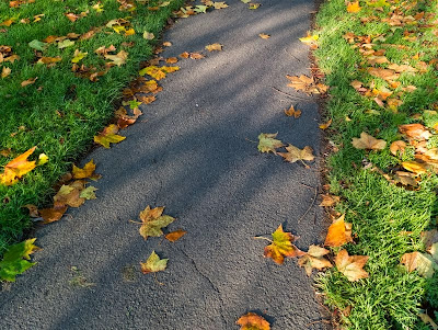 Fallen leaves on the path