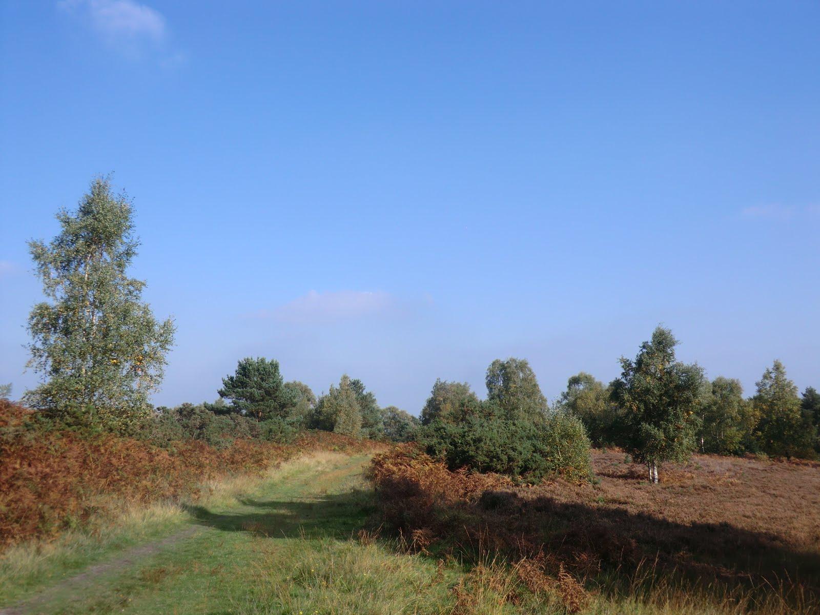 CIMG0835 Ashdown Forest