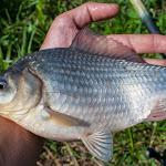 20140730_Fishing_Tuchyn_073.jpg
