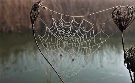 Λάρισα : Μια ανάσα από τον Πηνειό οι αράχνες πλέκουν τον ιστό τους χαρίζοντας ένα σπάνιο θέαμα