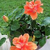 Gardening 2014 - 116_2936.JPG