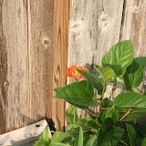 Gardening 2012 - IMG_3273.JPG