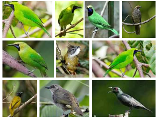 Daftar Nama dan Foto macam-macam Jenis Burung Kicauan dan Estimasi Harganya