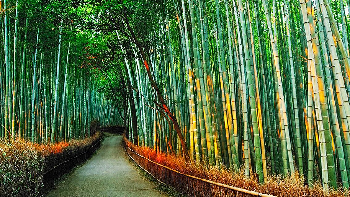 P R A B H U P E P S I Chinese Bamboo Tree