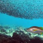 Under the pier @ Bari reef