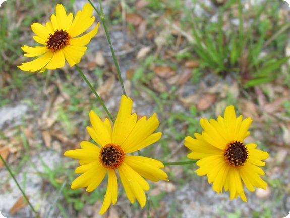Hampton Tract - Flower Plant