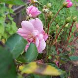 Gardening 2011 - 100_8850.JPG