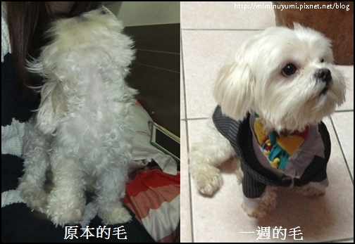 狗狗食用黃金海寶油一周後的前後比較