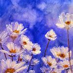 Daisies in the Sun Unframed Fine Art Version.jpg