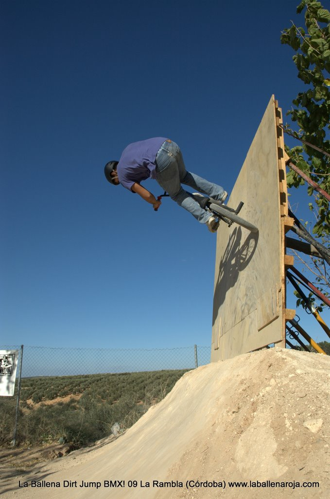 Ballena Dirt Jump BMX 2009 - BMX_09_0082.jpg