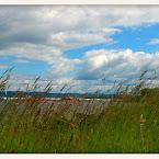 20120626-01-grass-by-lake.jpg
