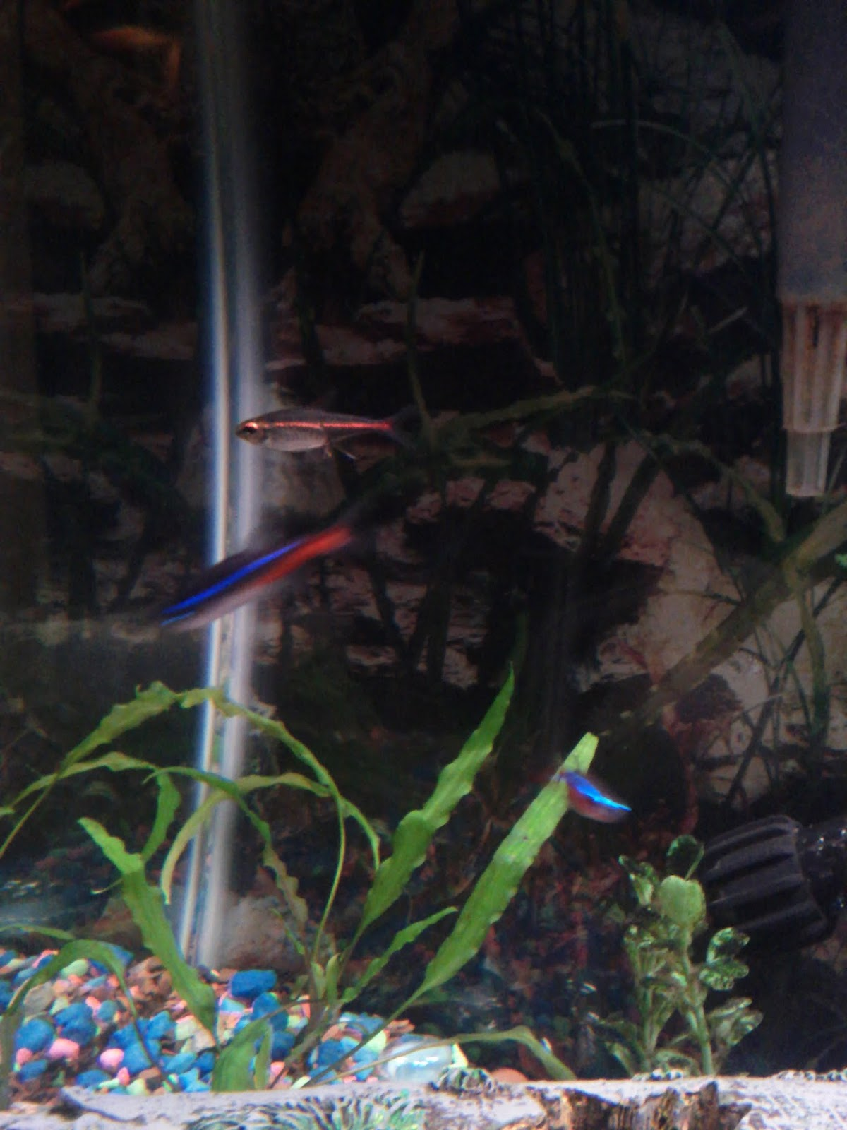 Fish - IMG_20121015_192540.jpg