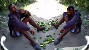 En San Juan atrapan joven robando limones, lo obligan a comerselos y lo dejan ir