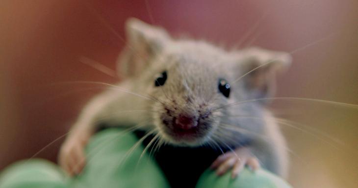 Experimentação animal Biomedcast