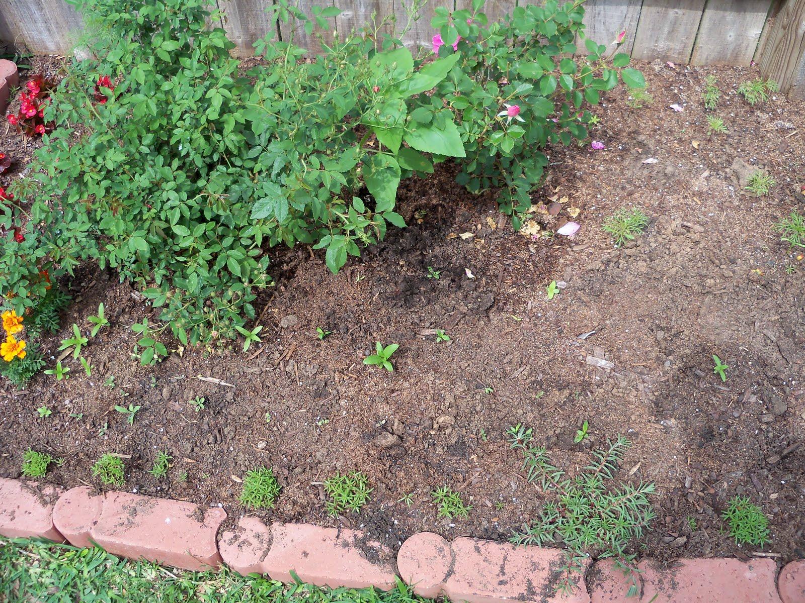 Gardening 2010 - 101_1072.JPG