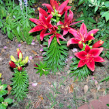 Gardening 2014 - 116_3138.JPG
