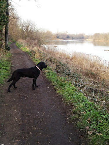 Dog Walking in Barnes with Theodore