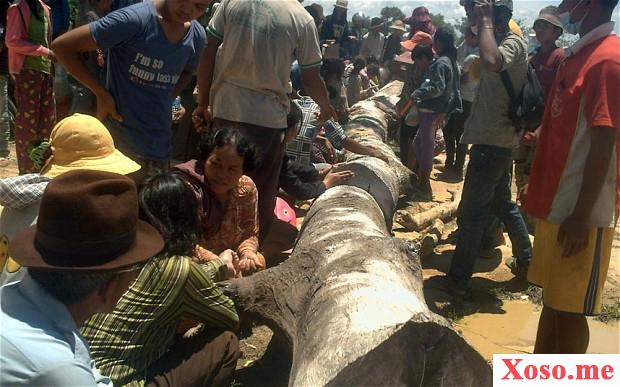 Khúc gỗ đoán số chuẩn nhất Campuchia